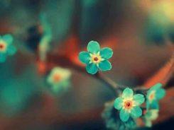 Offrir des fleurs, offrir des fleurs à une femme